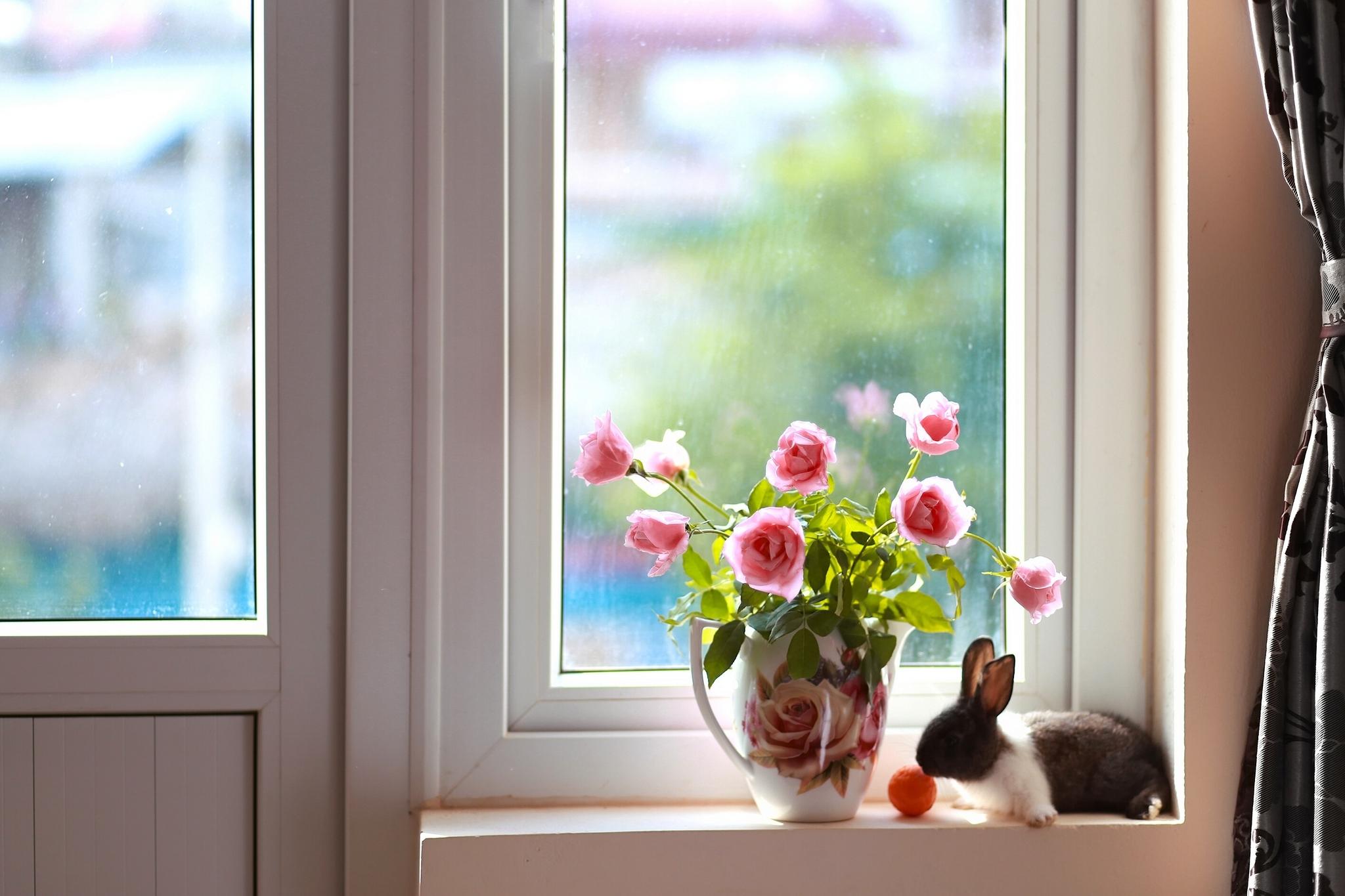 Как заказать пластиковые окна онлайн